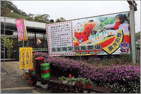 大湖採草莓 (1)