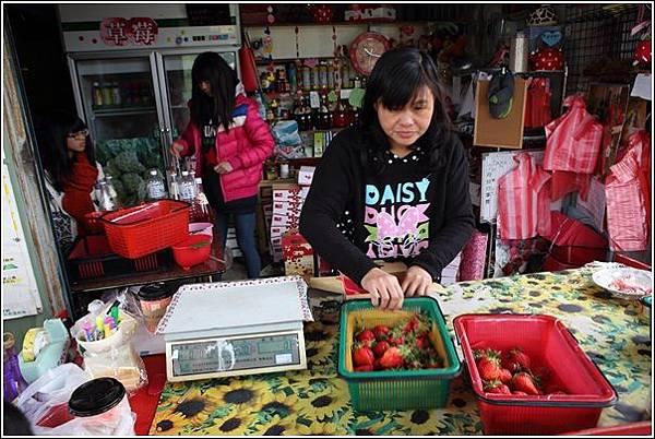 大湖採草莓 (14)