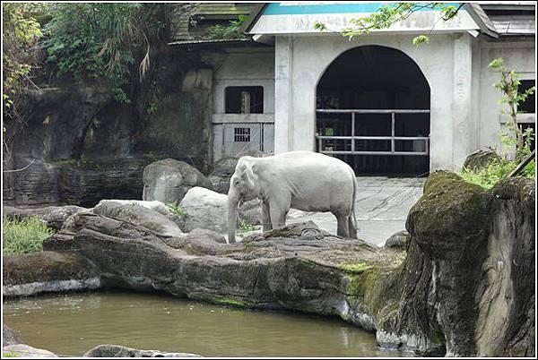 台北市動物園 (18)