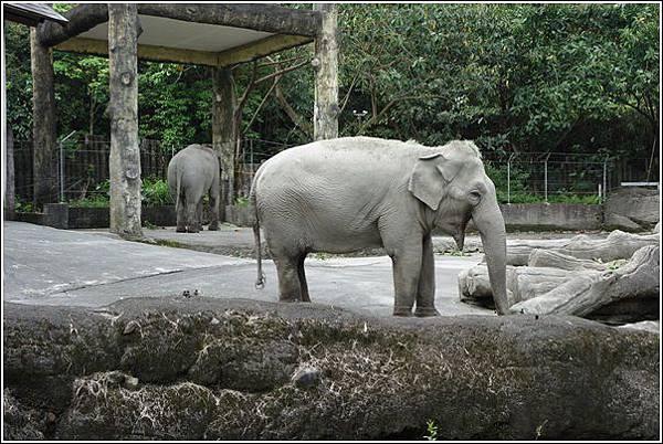 台北市動物園 (19)