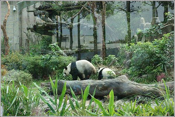 台北市動物園 (24)