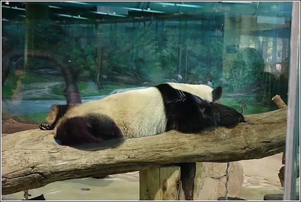 台北市動物園 (27)