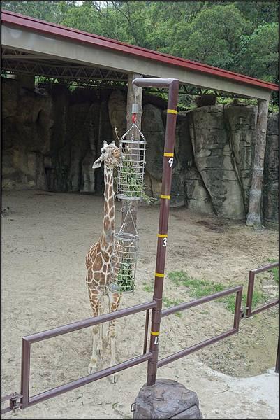 台北市動物園 (37)