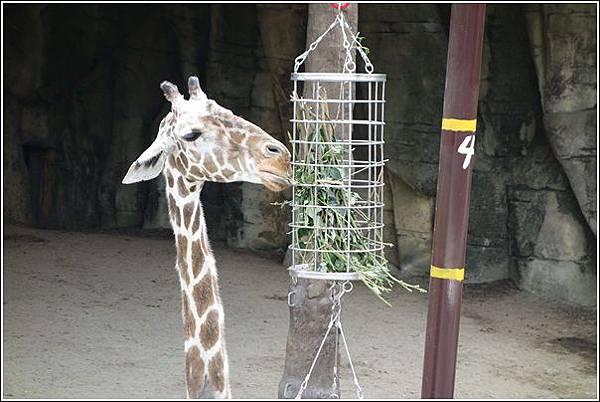 台北市動物園 (38)