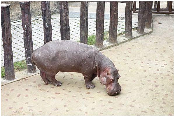 台北市動物園 (45)