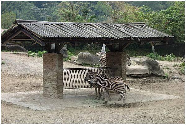 台北市動物園 (58)