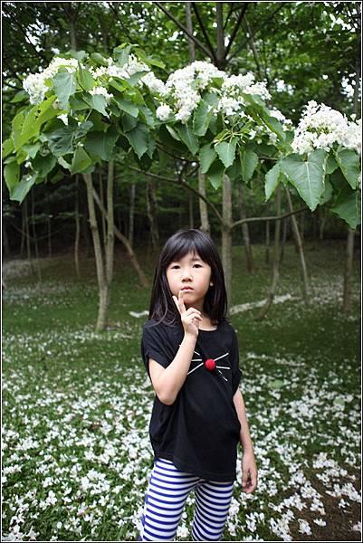 客家大院桐花樂活 (27)