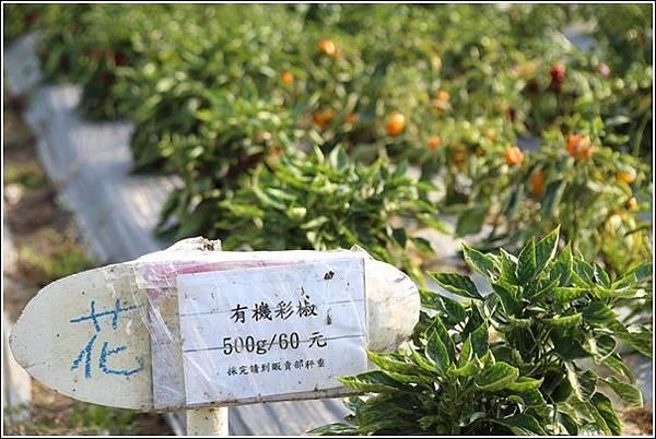 奇美農場挖地瓜 (14)