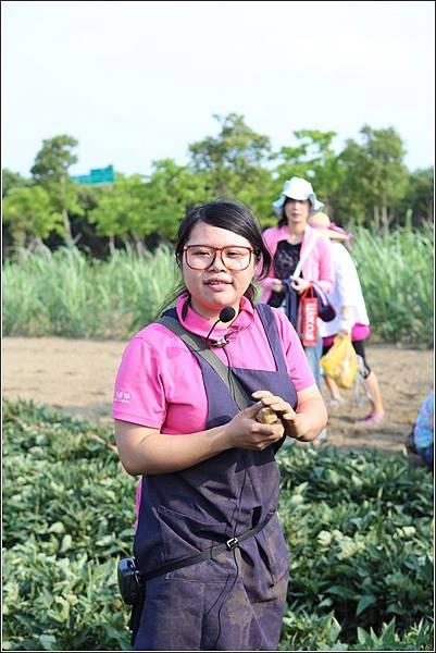 奇美農場挖地瓜 (25)