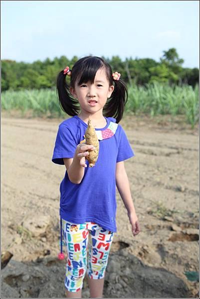 奇美農場挖地瓜 (27)