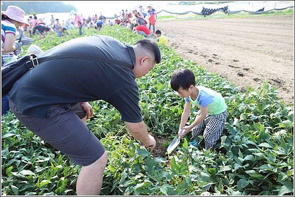 奇美農場挖地瓜 (26)