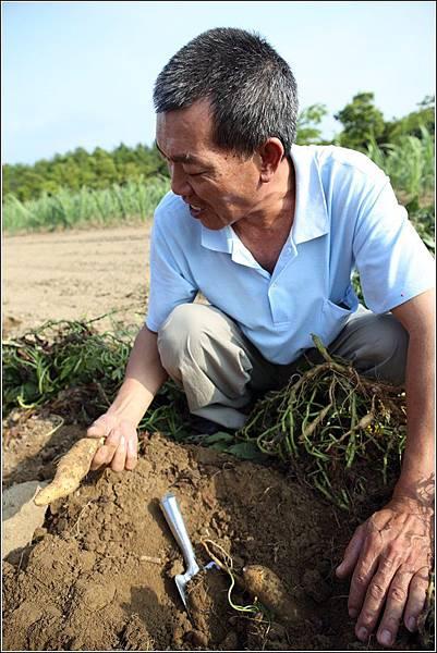奇美農場挖地瓜 (30)