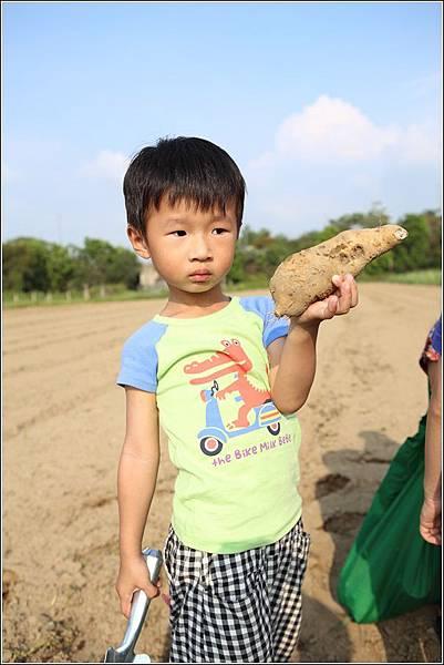 奇美農場挖地瓜 (28)