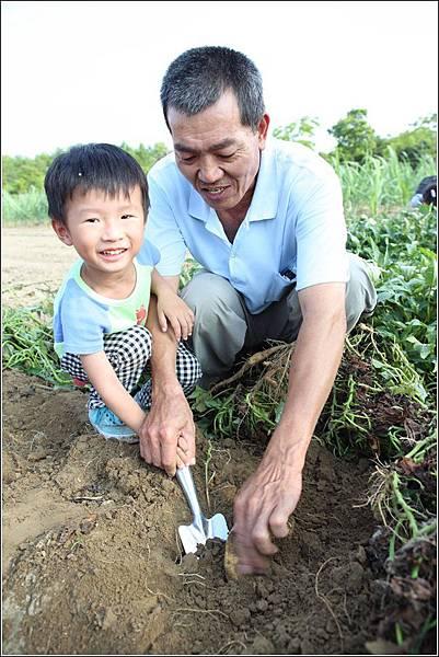 奇美農場挖地瓜 (33)