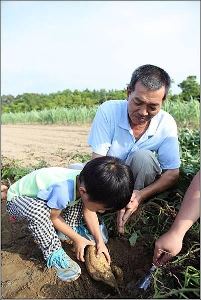 奇美農場挖地瓜 (34)