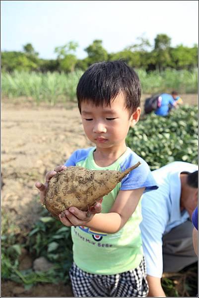 奇美農場挖地瓜 (35)