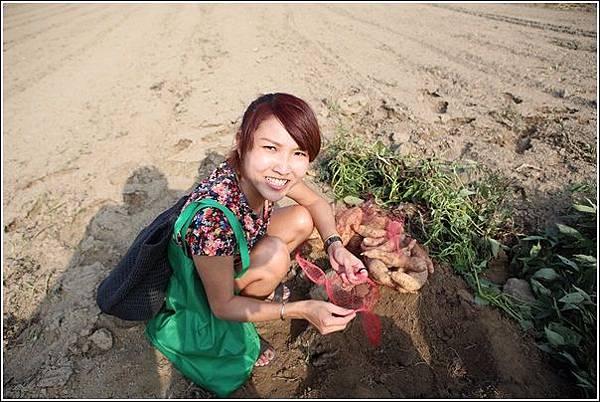 奇美農場挖地瓜 (36)