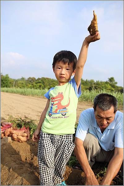 奇美農場挖地瓜 (38)