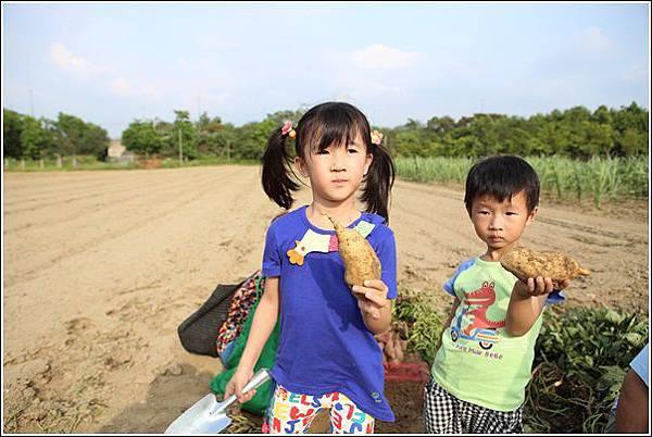 奇美農場挖地瓜 (41)