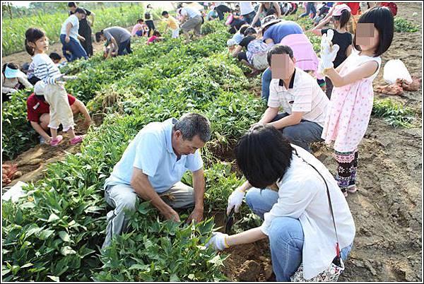 奇美農場挖地瓜 (45)