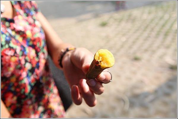 奇美農場挖地瓜 (57)