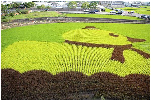彩繪稻田 (3)