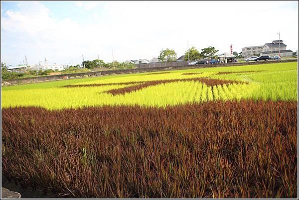 彩繪稻田 (8)