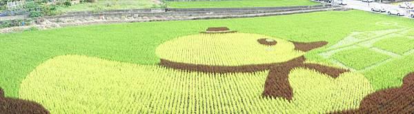 彩繪稻田 (11)