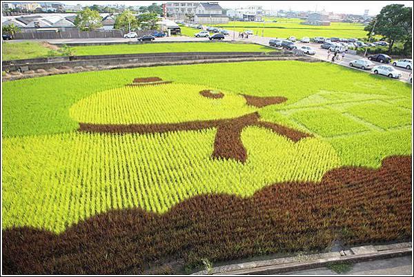 彩繪稻田 (5)