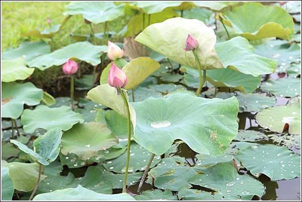 雙心生態池 (6)