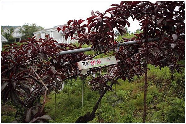 黃慶果園民宿 (65)
