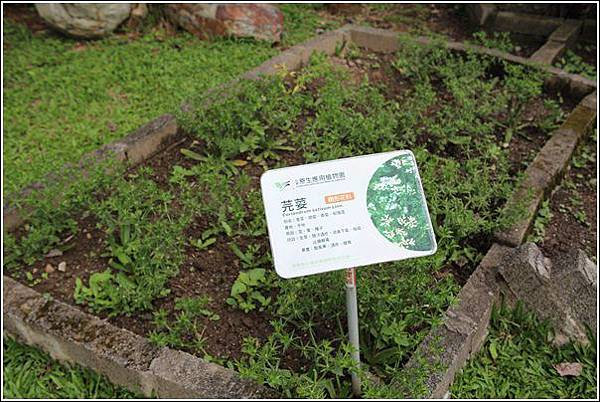 原生應用植物園 (34)