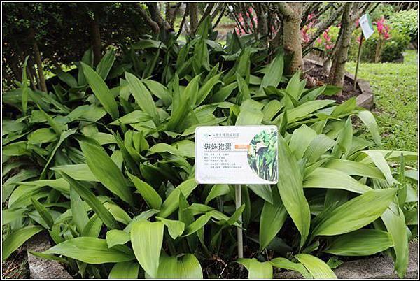 原生應用植物園 (35)