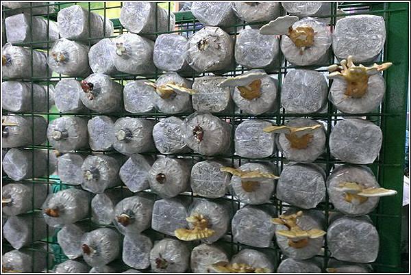魔菇生態休閒農場 (74)