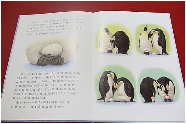 寶貝企鵝 (7)
