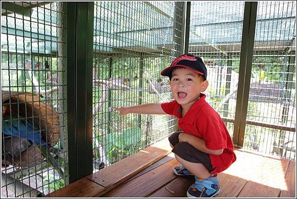 森林鳥花園 (12)