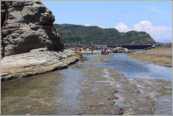 八斗子藻樂趣 (34)