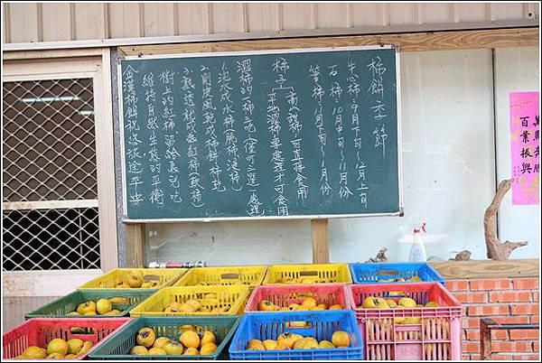 金漢柿餅 (4)