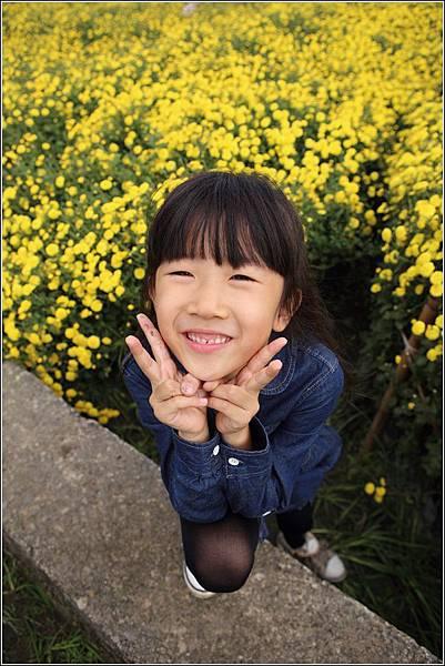 銅鑼杭菊 (13)