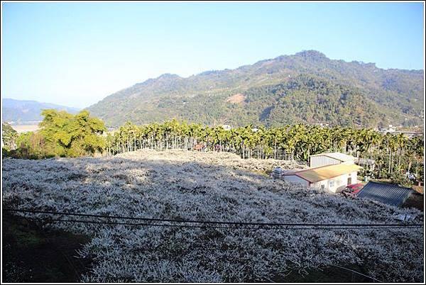 梅花森林 (2)