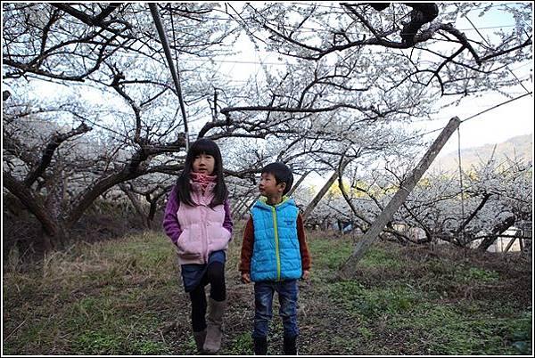 梅花森林 (7)