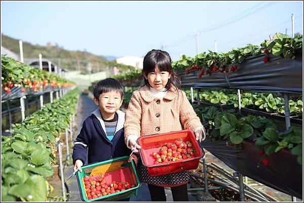 大湖採草莓 (12)