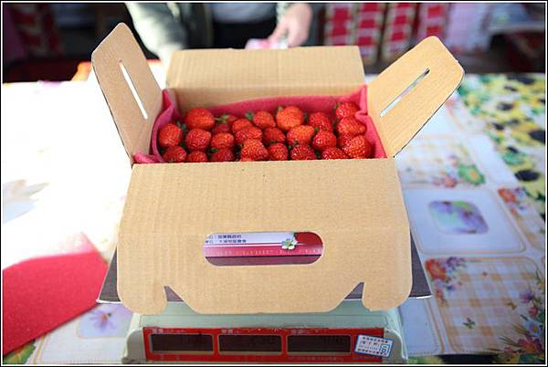 大湖採草莓 (18)