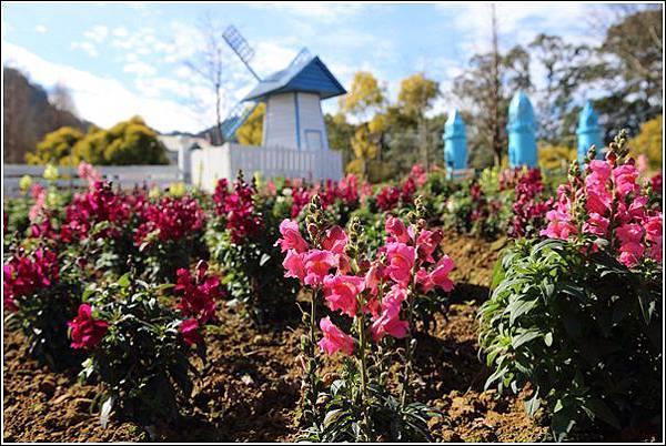 富田花園農場 (21)