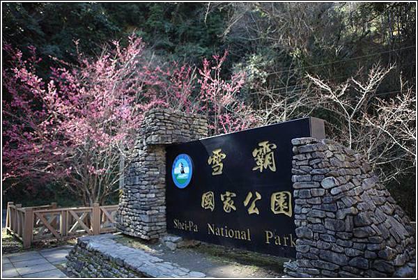 武陵農場櫻花季 (3)