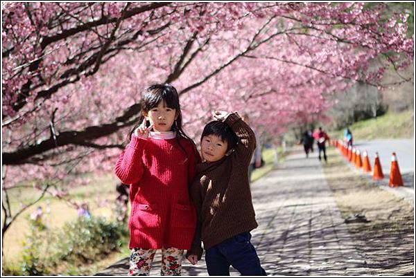 武陵農場櫻花季 (10)