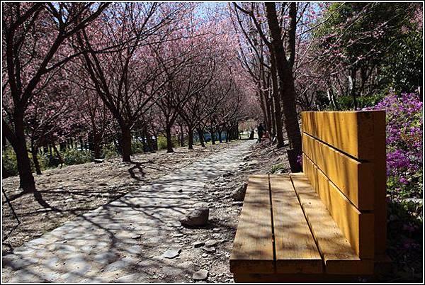 武陵農場櫻花季 (16)