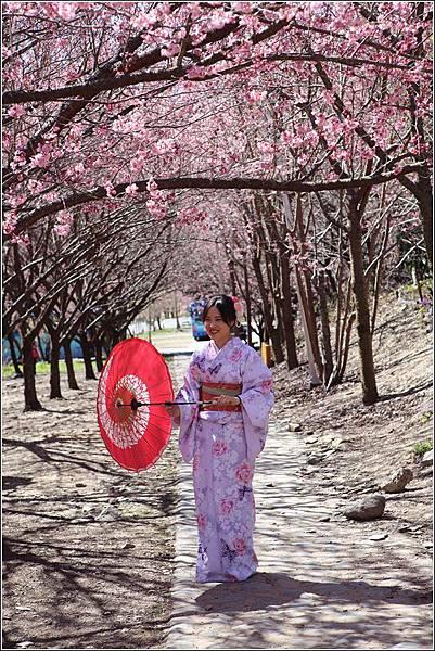 武陵農場櫻花季 (19)