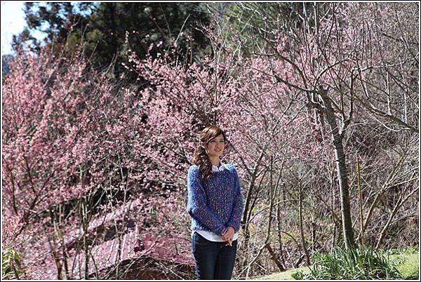 武陵農場櫻花季 (20)