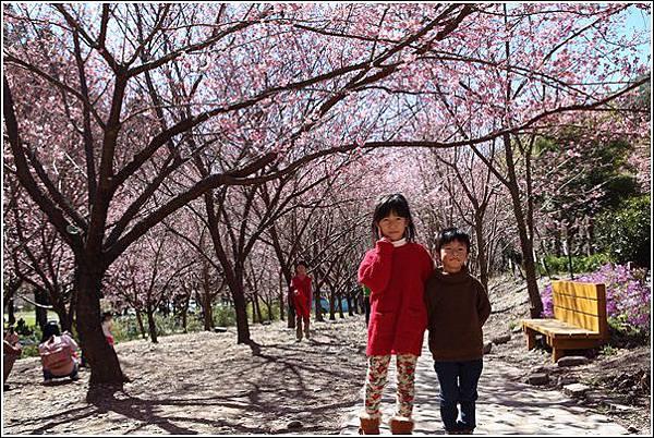 武陵農場櫻花季 (22)